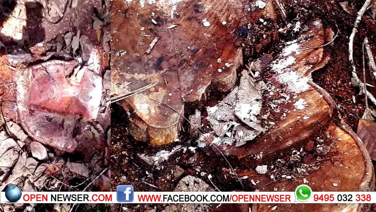 ഖാദിബോര്ഡിന്റെ സ്ഥലത്ത് നിന്നും അനധികൃത മരംമുറി  രണ്ടുപേര് കൂടി അറസ്റ്റില്